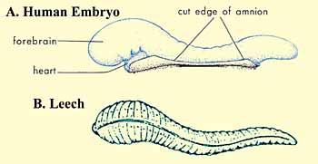 the_quran_on_human_embryonic_development_001
